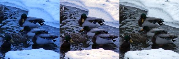Duck Edits 1