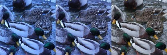 Duck Edits 2