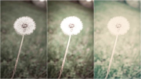 Dandelion Edits Collage